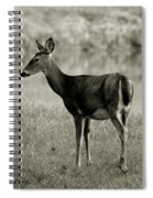 Doe By The Waters Edge Spiral Notebook