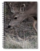 Doe Carefully Grazing In Tombstone Spiral Notebook