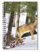 Doe Emerges Spiral Notebook