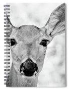 Doe Eyes - Bw Spiral Notebook