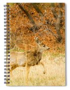 Doe High Stepping On Bald Mountain Spiral Notebook