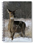 Doe In The Cove Spiral Notebook
