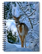 Doe In The Snow In Spokane 2 Spiral Notebook