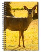Doe Spiral Notebook