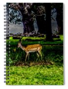 Doe - Oil Painting Print Spiral Notebook