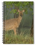 Doe On A Foggy Morning In Wyoming Spiral Notebook
