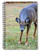 Doe Stomp Spiral Notebook