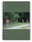 Doe With Twins Spiral Notebook