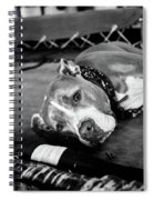 Dog At The Ring Spiral Notebook