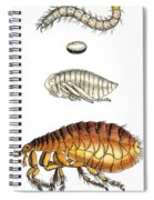 Dog Flea, Lifecycle, Illustration Spiral Notebook