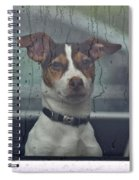 Dog Looking Out Car Window Spiral Notebook
