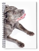 Dog Looking Up To Pet Copyspace Spiral Notebook
