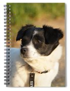 Dog On Sun Spiral Notebook