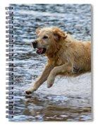 Dog Running On Shallow Lake Shore Spiral Notebook