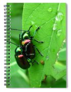 Dogbane Beetles Spiral Notebook