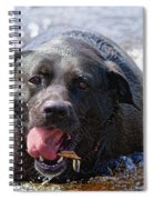 Dogs Sticks And Ponds Spiral Notebook
