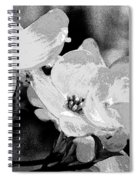 Dogwood Blossoms - Black And White Spiral Notebook