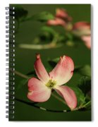 Dogwood In Pink Spiral Notebook