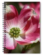 Dogwood Spring Spiral Notebook