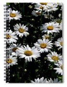 Dollop Of Daises Spiral Notebook