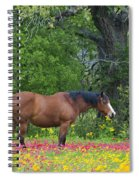 Domestic Horse In Field Of Wildflowers Spiral Notebook