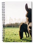 Donkey And Pony Spiral Notebook