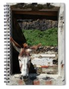 Donkey At The Window Spiral Notebook