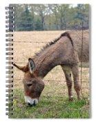 Donkey Finds Greener Grass Spiral Notebook