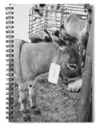 Donkey For Sale Spiral Notebook