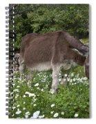 Donkey Grazing In Greece Spiral Notebook