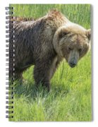 Don't Mess With Mama Bear Spiral Notebook