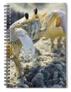 Don't Mess With The Crab Spiral Notebook