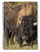 Don't Mess With This Bison Spiral Notebook