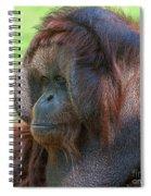 Dopey Eyes Spiral Notebook