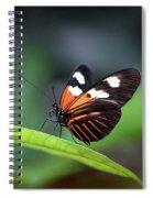 Doris Longwing Butterfly 2017 Spiral Notebook