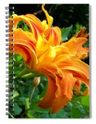 Double Blossom Orange Lily Spiral Notebook
