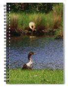 Double-crested Cormorant 2q Spiral Notebook