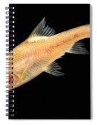 Double Horned Golden Line Barbel Spiral Notebook