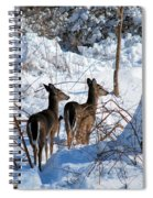 Double Look Spiral Notebook