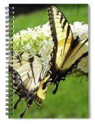 Double The Pleasure - Eastern Tiger Swallowtails Spiral Notebook
