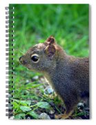 Douglas Squirrel  Spiral Notebook