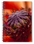 Douze Spiral Notebook