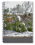Down Trees Spiral Notebook