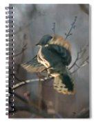 Downey Woodpecker Spiral Notebook