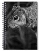 Downward Facing Squirrel Spiral Notebook