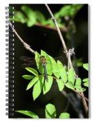 Downy Emerald Spiral Notebook