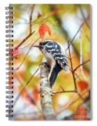 Downy Woodpecker In Autumn Forest Spiral Notebook