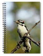 Downy Woodpecker In Fall Spiral Notebook