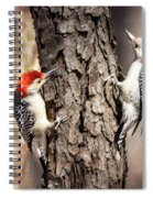 Downy Woodpeckers Spiral Notebook