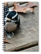 Downy Wooodpecker Picoides Pubscens Spiral Notebook